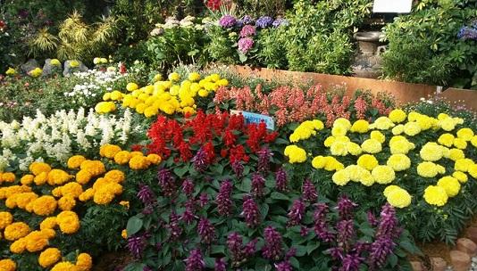 flowersinburnham