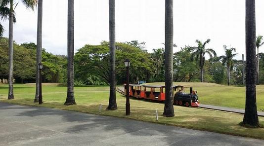 Greenery train